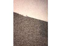 Roll of brown carpet