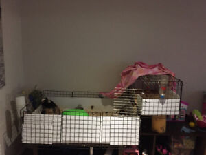 3 adorable guinea pigs with large 2 level home!