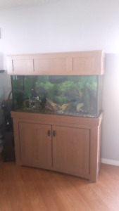 95 gallon Fish Tank, Stand, and accessories
