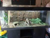 5x2 full set up juwel fish tank