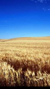 Looking to rent farmland stettler to drumheller