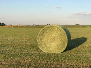 Premium Horse Hay for Sale - Round Bales Net Wrapped