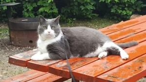 Lost Cat - Wrights Beach Camp, Penticton