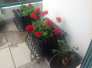 Wrought Iron Planters (2)
