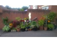 Various Garden Plants and Pots