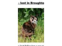 CAT MISSING FOLLOWING CAR ACCIDENT ON M6, J32