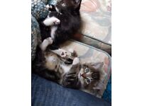 Missing 2 kittens from 15 Midland Close Hunslet. One black,One black and brown tabby