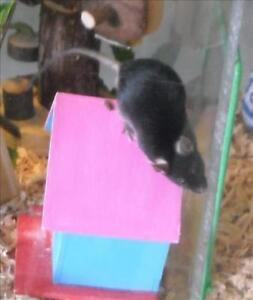 """Young Male Small & Furry - Mouse: """"Roald"""""""