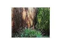 Thick Black Bamboo Screening Roll by Papillon 1.9m x 1.8m (2 available)