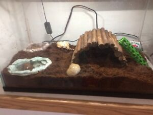 Two hermit crabs for sale!!
