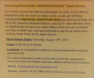 """""""Adoption Blitz"""" Reduced fees on all spayed/neutered cat/kittens"""