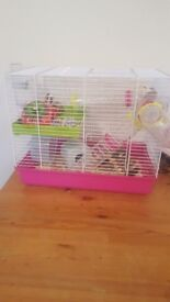 Hamster cage and 2 baby mice