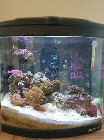 50 ltr Boyu saltwater aquarium with stock