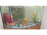 fish tank (200 litre)