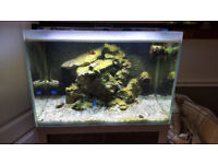 Fluval Sea M60 marine tank. 91litre... Beautiful !