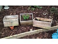 Wine crates with plant
