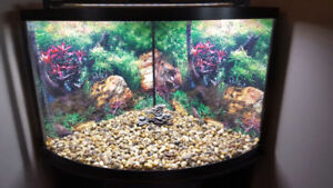 Beautiful corner fish tank with stand and accessories