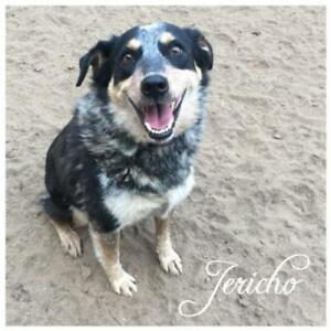 "Adult Female Dog: ""Jericho"""