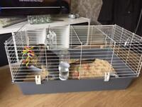 House rabbit plus cage and toys food etc