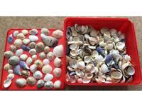 Sea Shells for Fish Tank Art and Craft