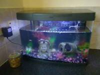 2ft Fish Tank With Fish And Food