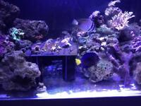 Marine corals and fish