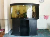 Fish tank wanted