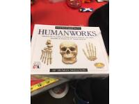 "Eyewitness Kits Humanworks 18"" Human Skeleton"