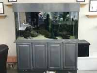 Large marine aquarium and sump 800 litre -