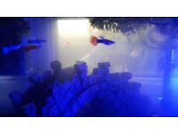 Everything fish, blue lobster, tank, accesories, light, filter, algae preventer, cleaning balls etc.