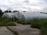 Two Northern Poly Tunnels for Sale. 63' x 27'. Only 4 Years Old.