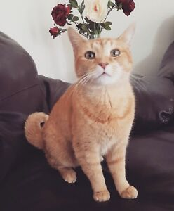 THE MOST AMAZING CAT FOR REHOMING