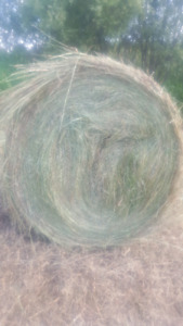Hay for sale 4 x5 soft core