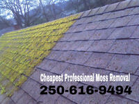 Moss Removal, Any Roof Care, Free Quotes 2506169494