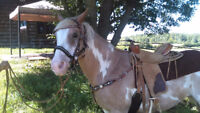 Looking for a horse transport from Ottawa to Charlotte n.b.