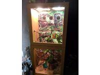 Complete chameleon vivarium