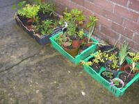 Varied Selection of Garden Plants, Bulbs and Seeds