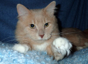 Cats & Kittens for Adoption *ADOPTION SPECIAL UNTIL AUG. 30TH!*