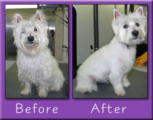 Dog/cat grooming $50/pet for the summer