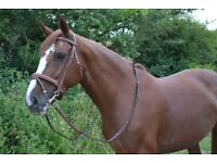 new brown bridle