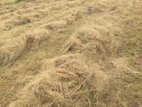 Hay round bales for sale !!