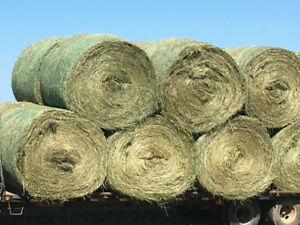 Rounds hay bales for sale $84/ton