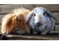 Home Care for Precious Pets (Small Pet Boarding)