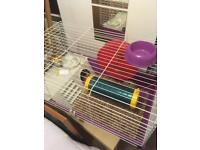 Large cage suitable for rats, guinea pigs or small rabbits.
