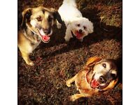 Professional dog walking & pet care service in the new forest and waterside area