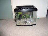 BARGAIN - Small fish tank