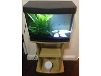 Fish tank 40 ltrs and Stand