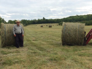 Hay for sale - several options