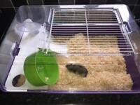 Russian Dwarf hamster with cage!