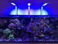 Marine sps corals